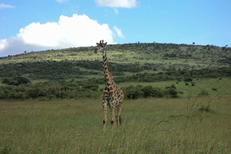 Kenya 2-Day Safari to Amboseli Park