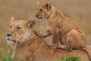 Lake Nakuru and Maasai Mara Private 4 Day Safari