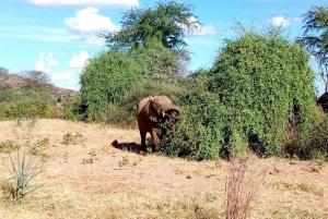 Lake Nakuru National Park Day Tour from Nairobi