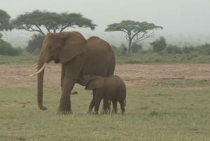 Mombasa: Tsavo East National Park Day Tour