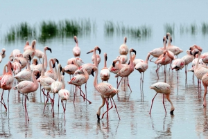 Nairobi: 2-Day Lake Nakuru National Park Lodge Safari