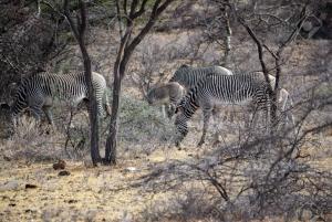 Nairobi: 3-Day All-Inclusive Samburu National Park Safari