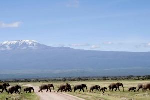 Nairobi: 3-Day Amboseli National Park Camping Safari