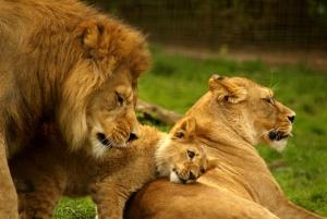 Nairobi: 3-Day Masai Mara Camping or Lodge Safari