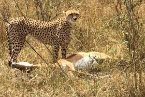 Nairobi: 3-Day Safari Adventure in Amboseli and Tsavo West