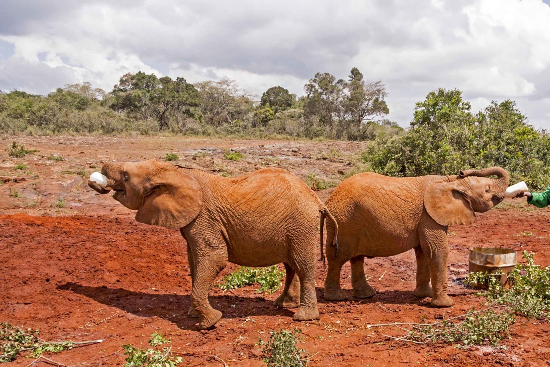 Nairobi: 3-Hour Baby Elephant Orphanage Visit