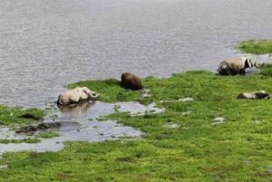 Nairobi: 4-Day Amboseli, Tsavo West & East Guided Safari