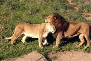 Nairobi: 4-Day Lake Mara and Nakuru Safari
