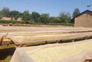 Nairobi: Coffee Farm and Factory Tour with Tasting