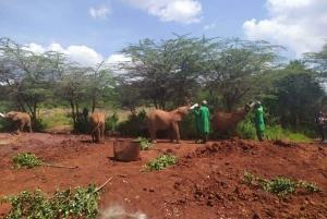 Nairobi: Elephants, Giraffes, Karen Blixen & Bomas Tour