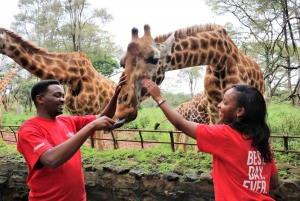 Nairobi: Giraffes & Elephants Small Group Tour