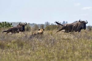 Nairobi: Half-Day Nairobi National Park Sunrise Game Drive