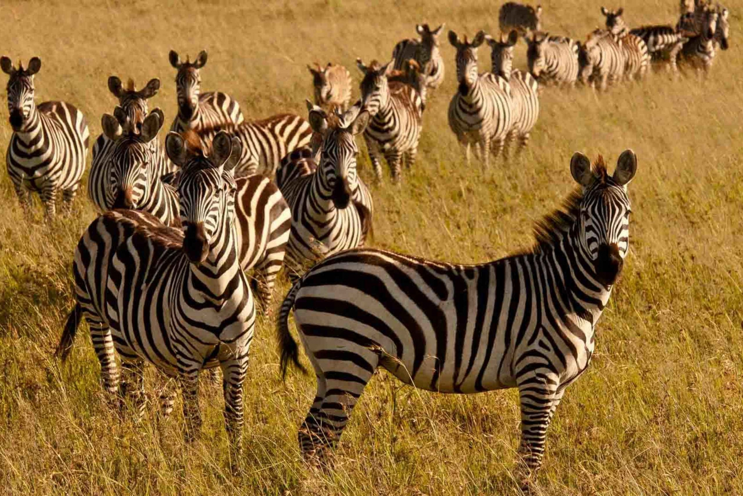 Nairobi Highlights Wildlife Safari