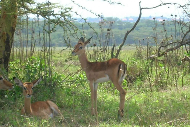 Nairobi: Nairobi National Park Half-Day Tour