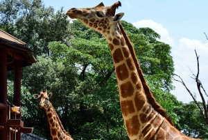 Nairobi: National Park, Baby Elephant, & Giraffe Center Tour