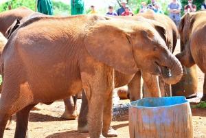 Nairobi: National Park & Elephant Orphanage Half-Day Tour