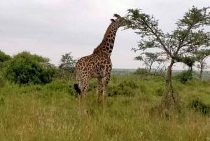 Nairobi National Park, Elephant Sanctuary and Giraffe Center