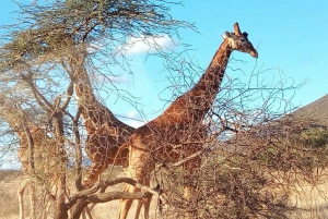 Nairobi National Park, Elephants, Giraffes & Bomas Day Trip