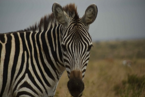 Nairobi National Park Full or Half-Day Tour with Guide