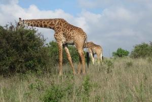 Nairobi National Park: Half-Day Guided Tour from Nairobi