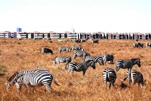 Nairobi National Park: Half or Full-Day Private Layover Tour