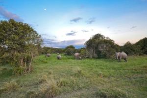 Nairobi: Ol Pejeta Conservancy and Chimpanzee Sanctuary Tour