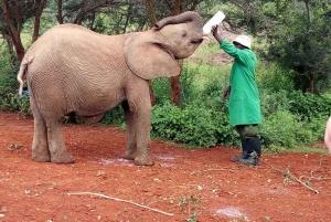 Nairobi: Private Elephant Orphanage All Inclusive Tour