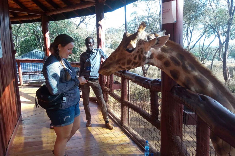 Nairobi: Wildlife, Karen Blixen and Local Culture Tour