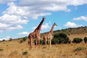 Ol Pejeta Conservancy Full Day Tour From Nairobi