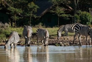 Overnight Safari to Serena Sweetwaters
