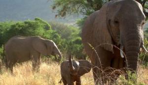 Rhino Safaris ltd