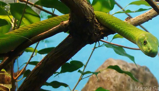 Snake Safari and Visitors Centre