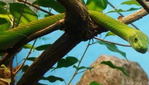 Snake Safari and Visitors Centre