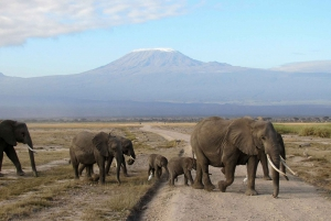 Three-Day Safari to Amboseli