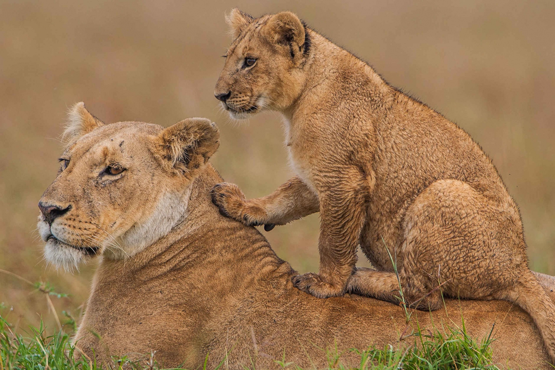 Three-Day Safari to Masai Mara