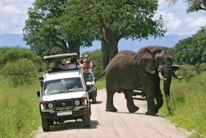 Tsavo East and West: 3-Day Wildlife Safari From Mombasa