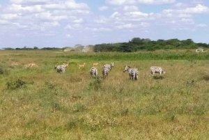 Tsavo East National Park: 2-Day Tour from Mombasa