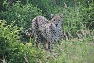 Tsavo East National Park: Overnight Safari from Mombasa