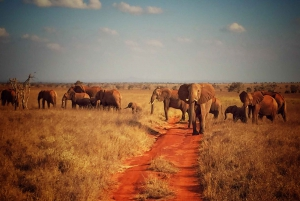 Tsavo East & Salt Lick Lodge Safari 2-Day Tour