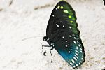 Koh Samui Butterfly Garden