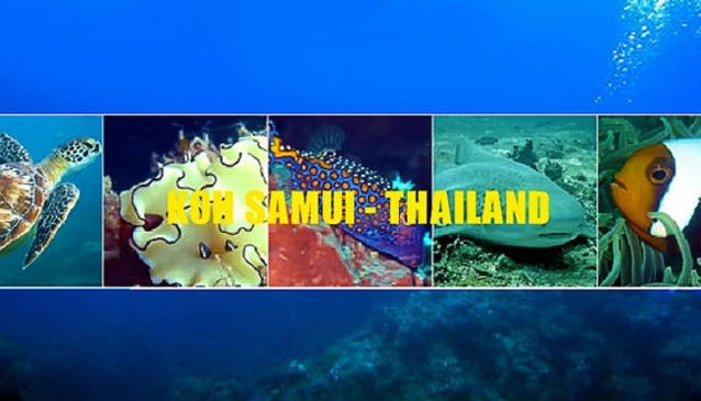 The Dive Academy Samui