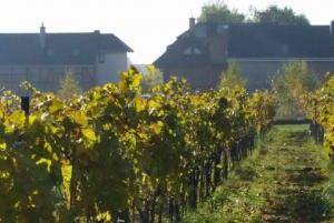 From Krakow: Kresy Vineyard Guided Private Tour