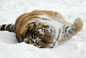From Krakow: Zoo Trip with Transfer