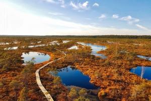 From Riga: Half-Day Adventure In Kemeri National Park