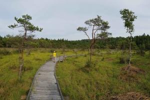 From Riga: Slītere National Park Latvian Nature Hiking Tour