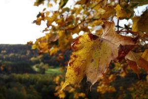 Gorgeous Golden Autumn in Sigulda