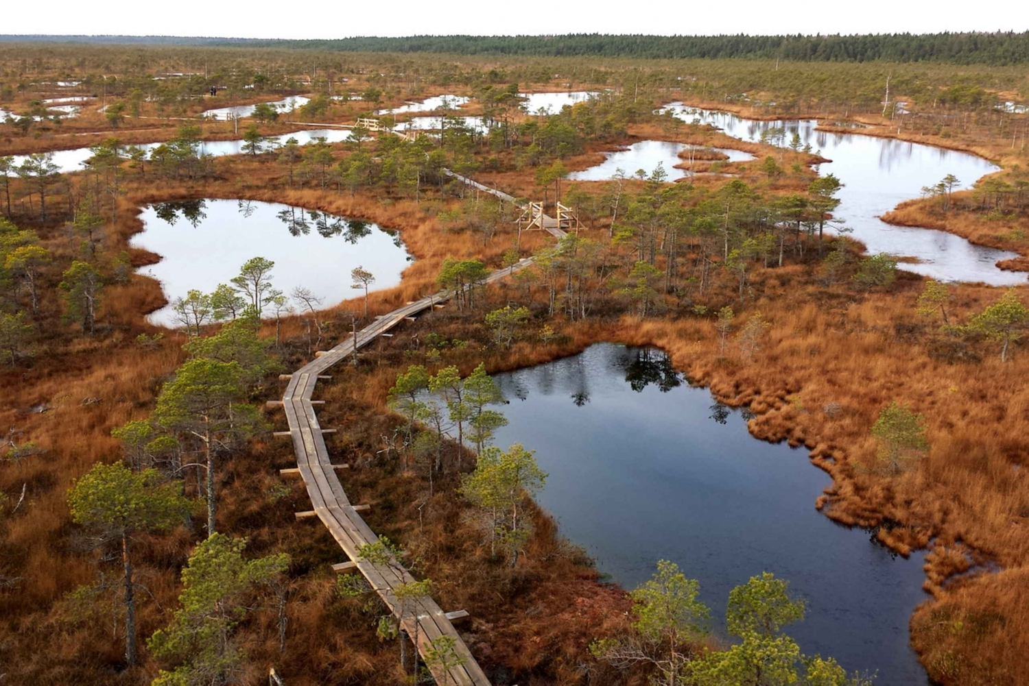 Kemeri National Park & Baltic Seaside Tour Bog Boardwalk