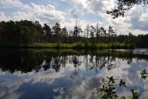 Riga: Half-Day Natural Ecosystems Hike