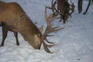 Turaida Reserve & Deer Safari on Latvia Winter Tour