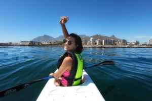 Cape Town: Marine Life Kayak Tour From The V&A Waterfront